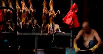 China prohíbe por fin el consumo de perros