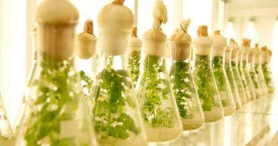 Biotecnología aplicada a productos naturales