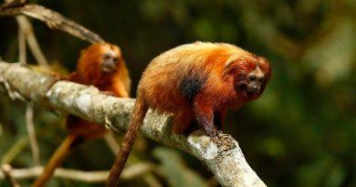 Trastorna COVID-19 la defensa mundial de especies en peligro
