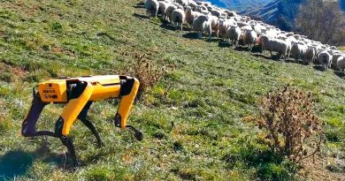 El perro pastor robot que no gusta a los pastores