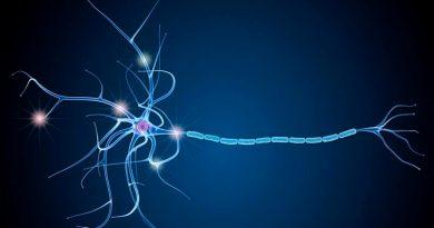 Células humanas para reparar la pérdida de mielina en la esclerosis múltiple
