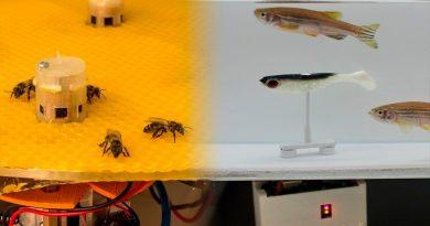 Robots consiguen que peces y abejas se comuniquen entre sí