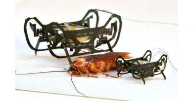 Robot cucaracha, destreza mecánica en menos de 1 gramo