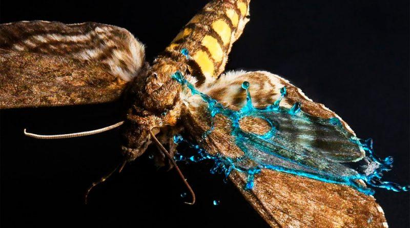 El secreto de las mariposas para sobrevivir al impacto de las gotas de lluvia: alas con microblindaje