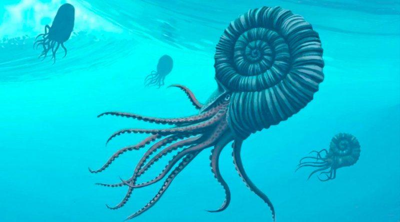 Jóvenes estudiantes hallaron fósil de 95 kilos perteneciente a una criatura marina de hace 115 millones de años