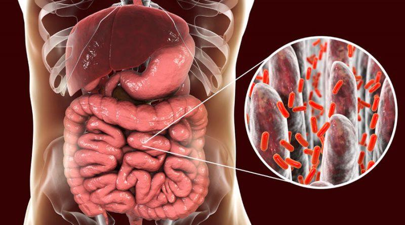 La remodelación bacteriana intestinal revierte la aterosclerosis