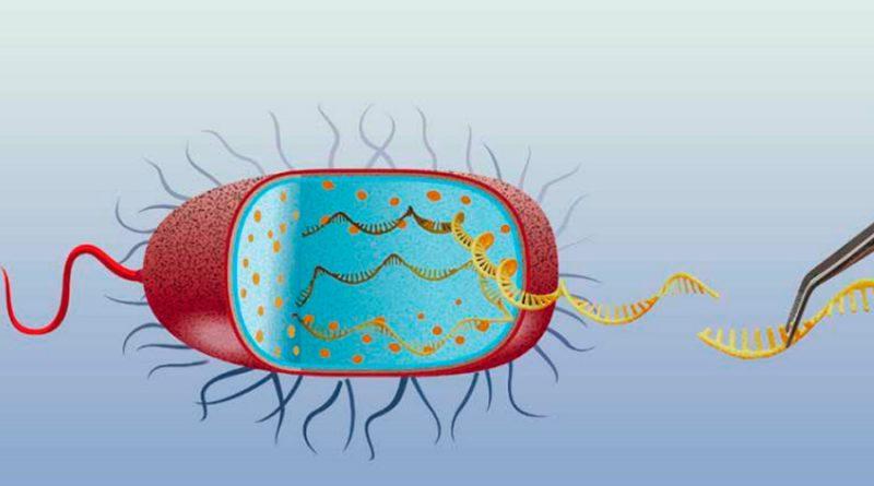 ARN pequeños en bacterias: decisiones sobre la selección del menú