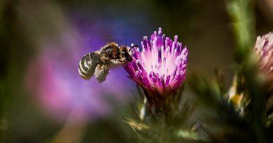 Polinizar con burbujas, estrategia ante desaparición de abejas