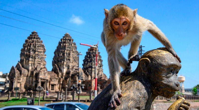 Monos se apoderan de ciudad en Tailandia durante la pandemia