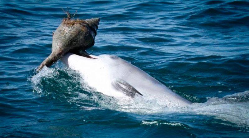 Los delfines aprenden a comer culturalmente, como los grandes simios