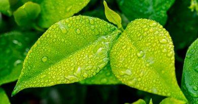 Se descubre la razón por la que las plantas son verdes: transforman la energía de la luz en una química
