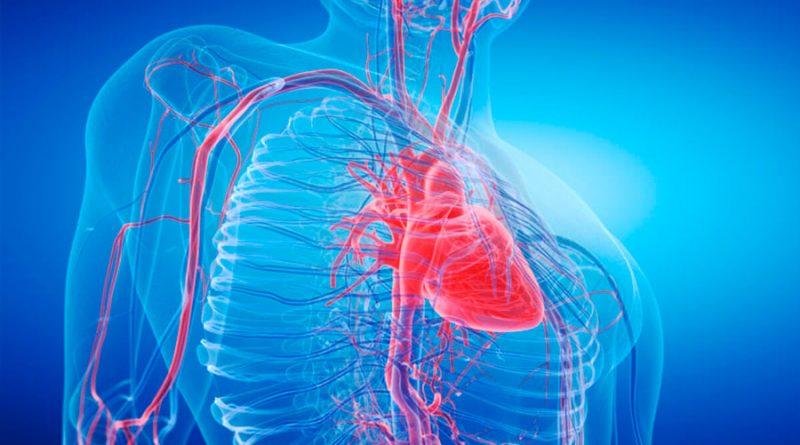 Descubren cómo una proteína clave puede ayudar al corazón a reparar el daño tras un infarto
