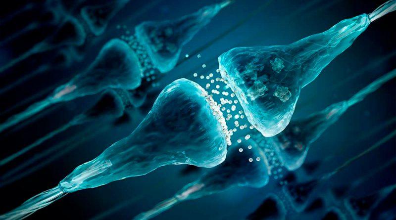 Hallan moléculas con potencial terapéutico contra la epilepsia