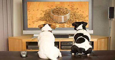 ¿Qué ven los perros y gatos cuando miran la televisión? Los expertos nos lo explican