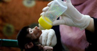 Los zoológicos están experimentando un baby boom en el medio de la cuarentena