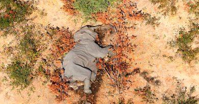 El gobierno de Botsuana investiga la misteriosa muerte en masa de cientos de elefantes