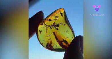 Así luce una burbuja atrapada dentro de fósil de 30 millones de años