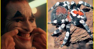 Científicos descubren araña parecida a 'Joker' y la nombran... ¡Como Joaquín Phoenix!