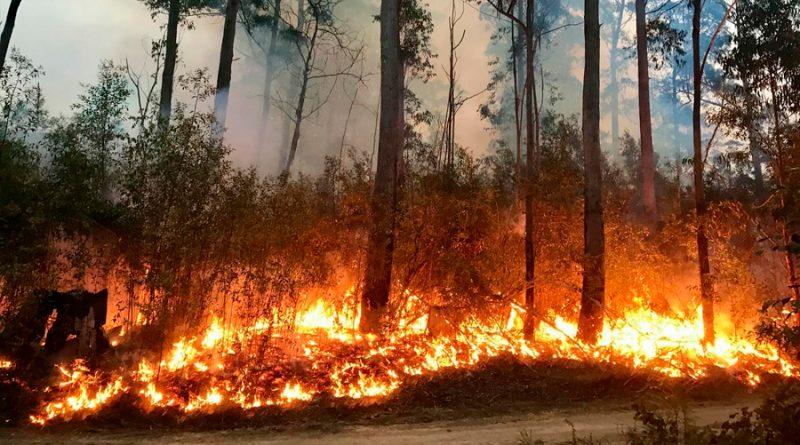 Inventan un detector de incendios para bosques que recarga la batería con el movimiento de las ramas