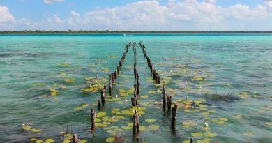 UNAM: Bacalar, el arrecife bacteriano más grande del mundo, en grave riesgo