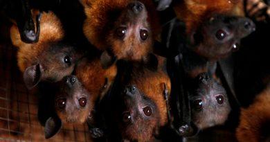 Un virus 96% parecido al Covid-19 fue hallado hace 8 años en una mina infestada de murciélagos de China
