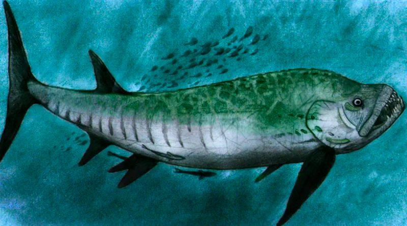 """Investigadores descubren restos de un terrorífico """"pez bulldog"""" en la Patagonia"""