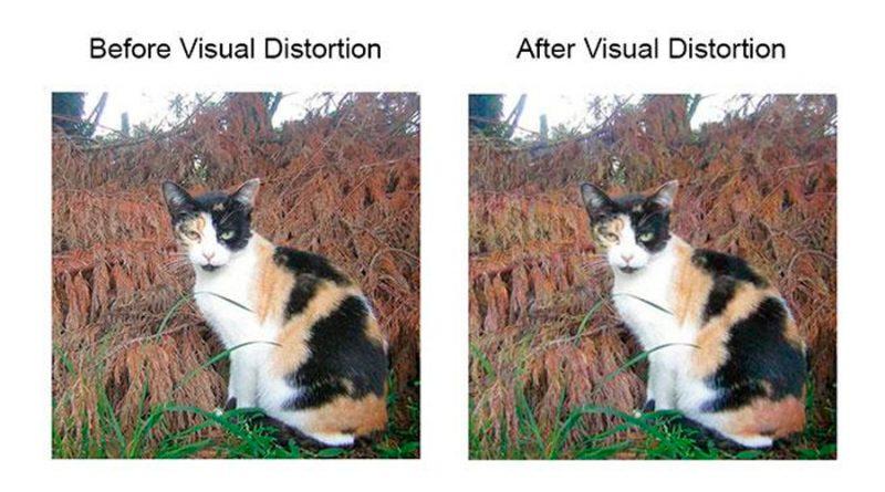 Reto a la IA: crean una técnica que impide a las máquinas reconocer imágenes