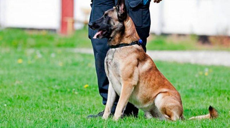 El ejército alemán entrena a perros para que detecten el Covid-19