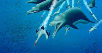 El esqueleto de un delfín extinto de 4,5 metros sugiere una evolución paralela entre las ballenas