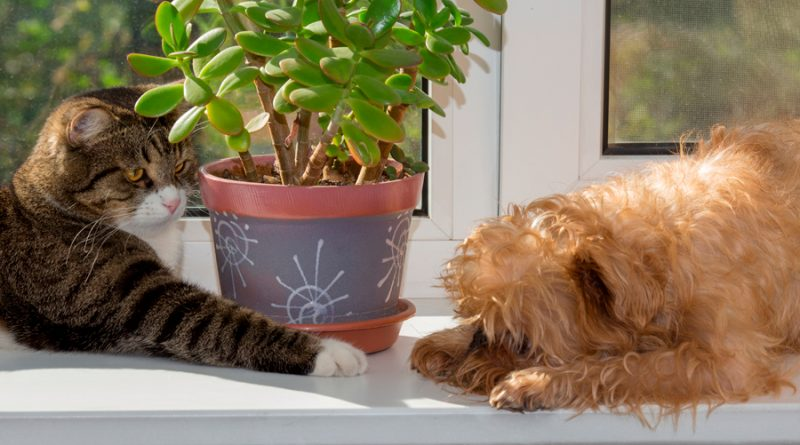 10 plantas que podrían ser tóxicas para perros y gatos