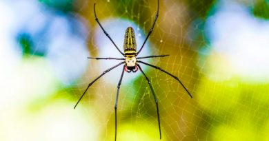 Lentes de seda de araña capturan imágenes de alta resolución dentro de los tejidos