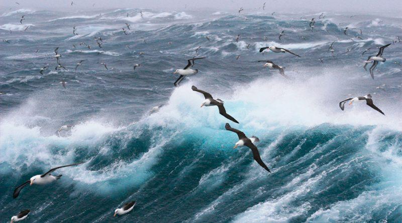 Albatros contra la pesca ilegal: así se les ha reclutado para que patrullen los océanos