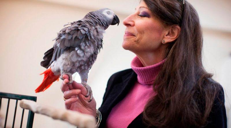 Experimento: Griffin, el loro gris que dejó en ridículo a Harvard