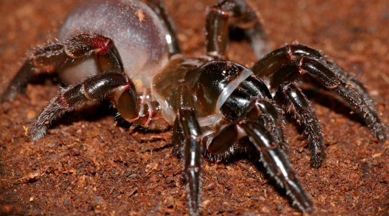 Descubren un nuevo tipo de araña que construye madrigueras 'con puerta'