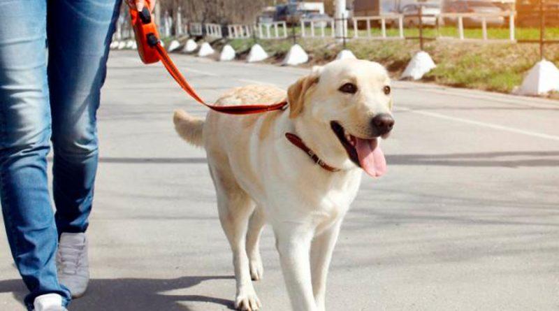 La razón por la que tu perro te sigue a cualquier parte