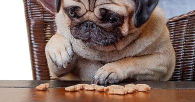 Los perros calculan cantidades igual que los humanos