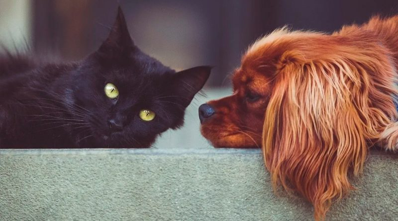 ¡Detente! No uses gel antibacterial en tus mascotas