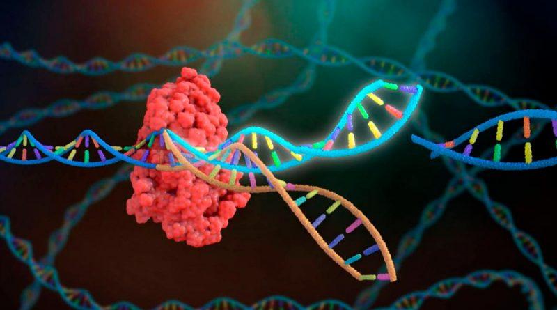 Una nueva herramienta CRISPR ultracompacta revela el primer virus con antivirus