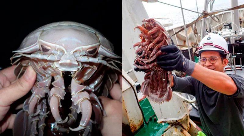 """Investigadores hallan en las profundidades del océano una gigantesca """"cucaracha marina"""""""