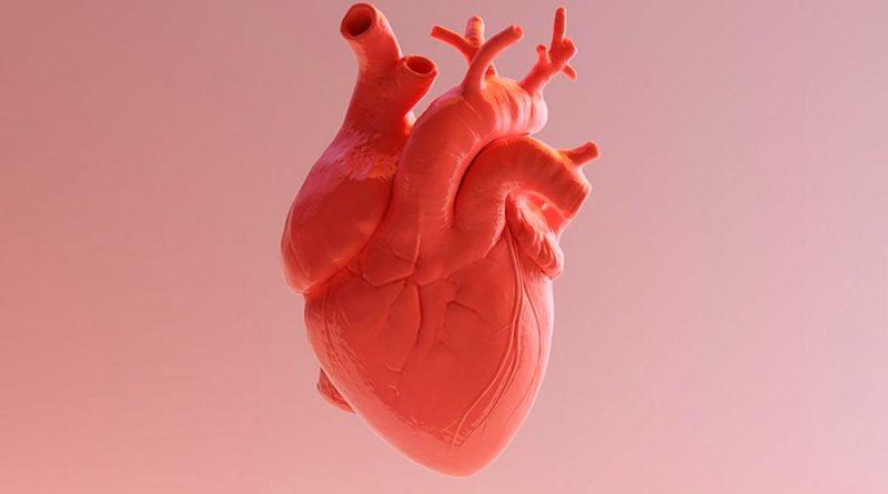 Crean un corazón capaz de bombear impreso en 3D con células madre humanas