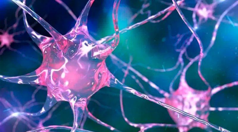 Descubren una regeneración extraordinaria de neuronas dañadas