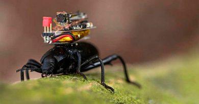 Estos escarabajos llevan una cámara en su espalda de solo medio gramo, que envía streaming a un móvil