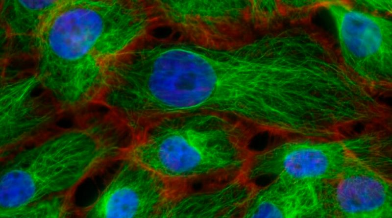"""Descubren en el esperma la clave de la """"inmortalidad"""" genética"""