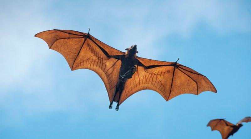 Investigadores mexicanos atrás de la ciencia de saber escuchar a los murciélagos