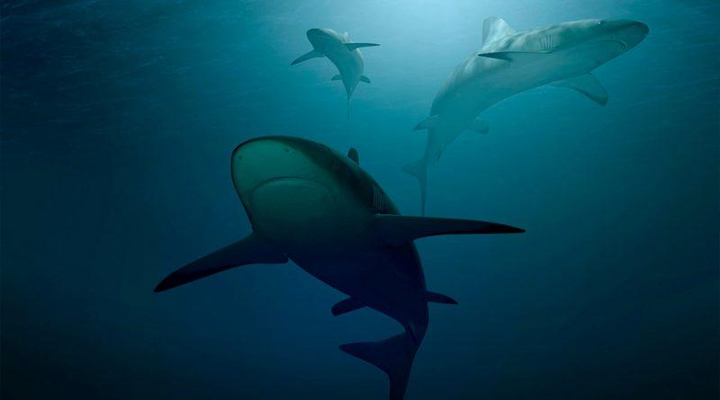 Científicos alertan declive en población de tiburones
