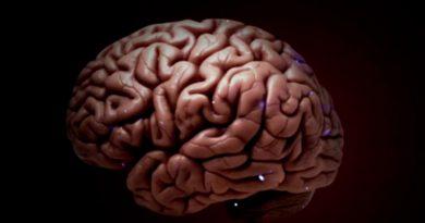Científicos mexicanos descubren que hormonas sexuales podrían estimular tumores cerebrales