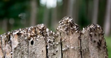 Así es la 'orgía' de las hormigas voladoras captada por los radares de lluvia