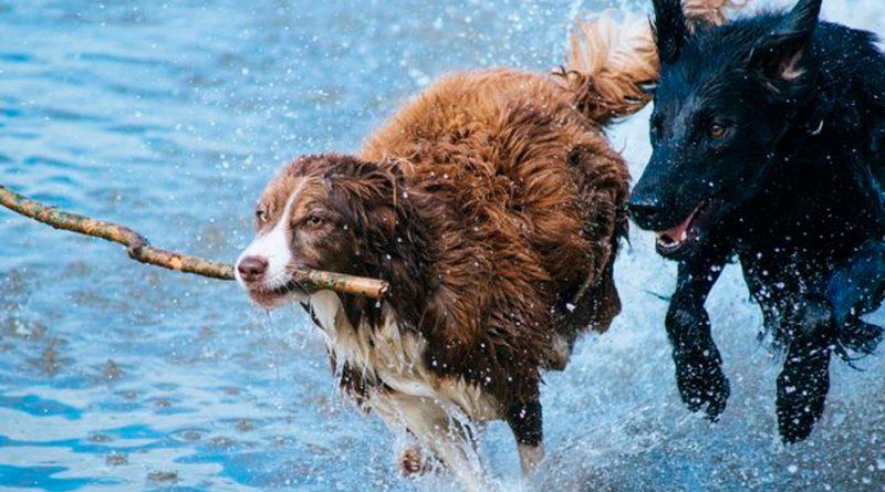 Los perros usan el campo magnético de la Tierra para tomar atajos y ubicarse