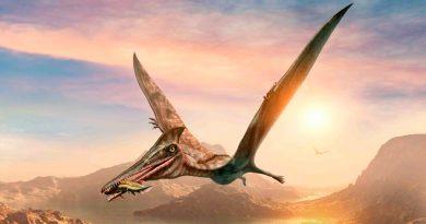 Hallan restos de un reptil volador desconocido en México