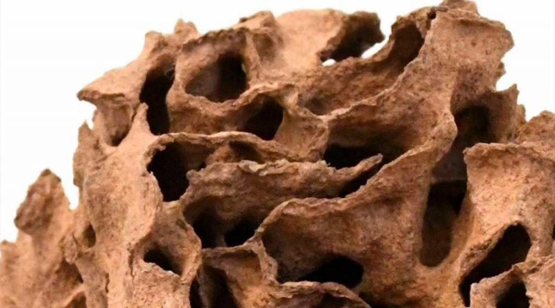 Las termitas siguen una simple regla arquitectónica para sus nidos